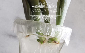 How To Succulent Propagation: Water Method