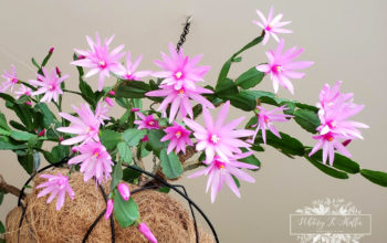 How To Care For Your Easter Cactus