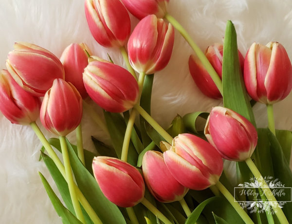 spring bulbs, tulips, after care guide, Whitney K Shaffer, pink tulips, gardening, natural