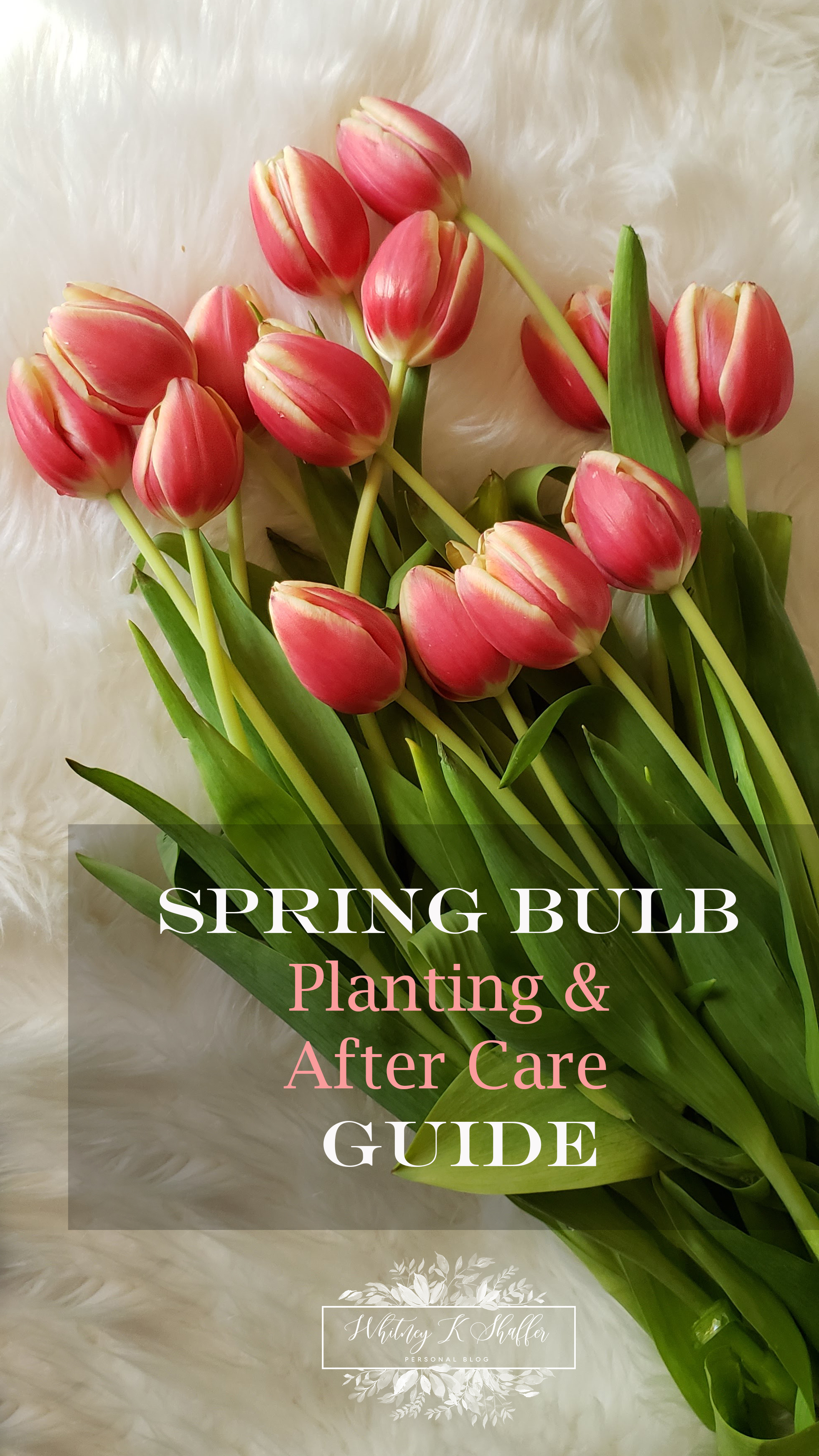 Planting Spring Bulbs And After Care Guide Whitneykshaffer Com