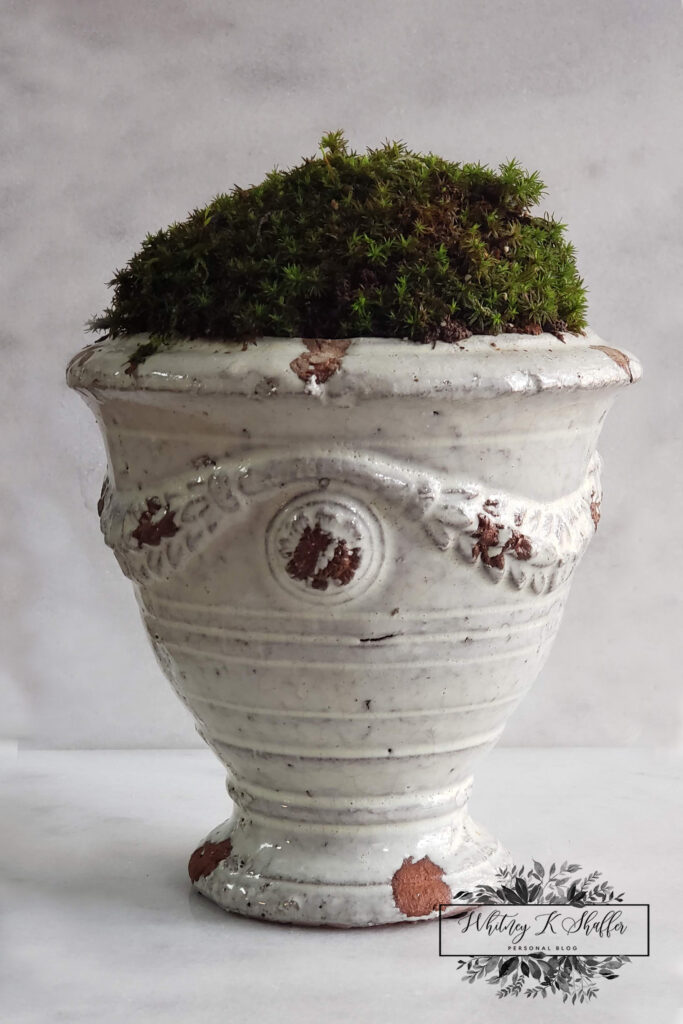 Moss topped ceramic urn