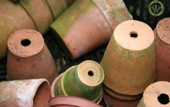 Cleaning Terracotta Pots: 3 Methods To Master